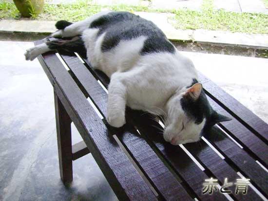 マレーシアの猫.jpg