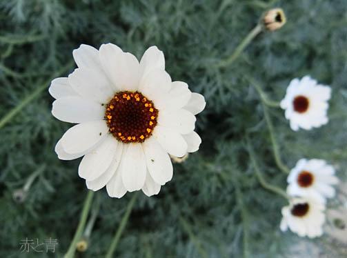 白い花1_edited-1.jpg
