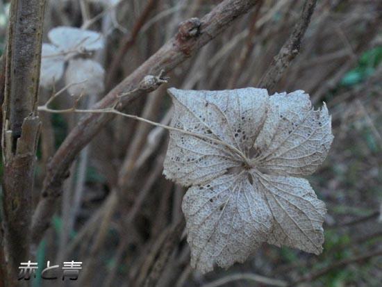 花のミイラ1.jpg