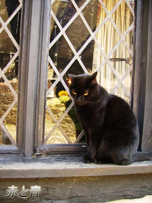 黒い猫.jpg