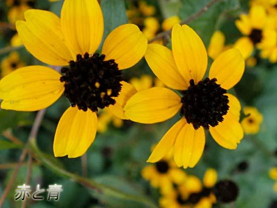 黒と黄色のダンス1.jpg